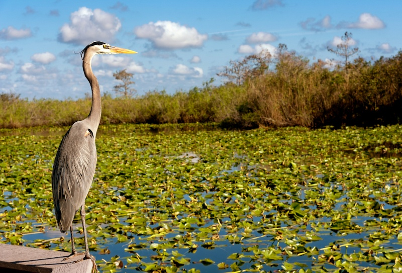 Everglades National Park | Florida | 12 St. Pete Day Trips You Need To Take | Bonnibelle Chukwuneta, Millennial Lifestyle By Design