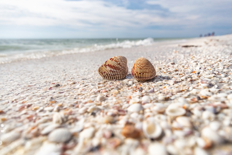 Sanibel Island, FL | Captiva Island, FL | 12 St. Pete Day Trips You Need To Take | Bonnibelle Chukwuneta, Millennial Lifestyle By Design